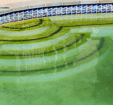All About Algae And Beating It Hayward Poolside Blog