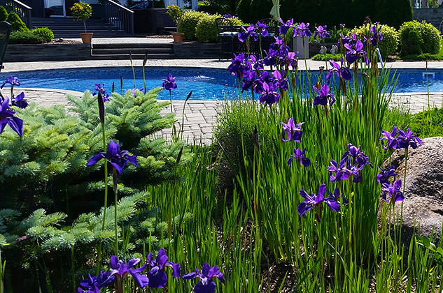 Hayward Poolside Blog: Landscaping